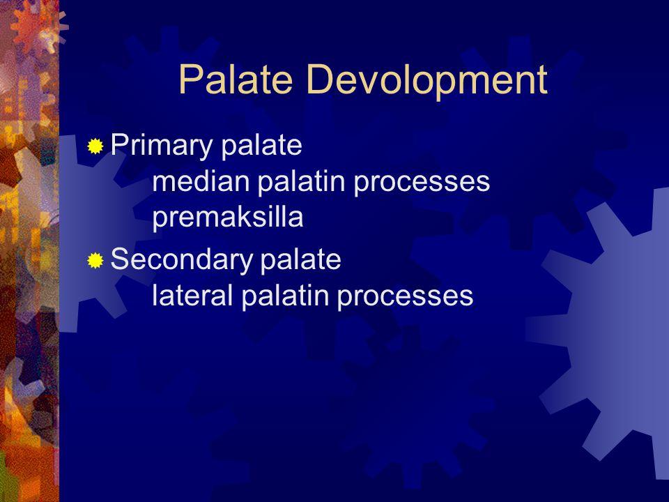 Palate Devolopment  Primary palate median palatin processes premaksilla  Secondary palate lateral palatin processes