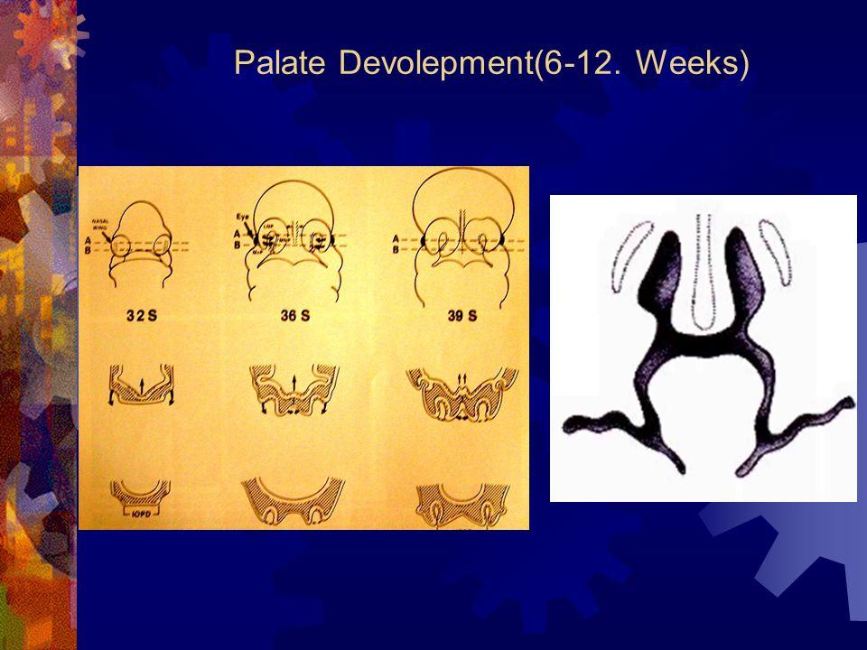 Palate Devolepment(6-12. Weeks)