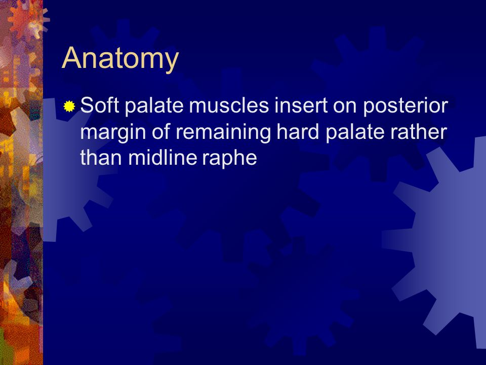 Anatomy  Soft palate muscles insert on posterior margin of remaining hard palate rather than midline raphe