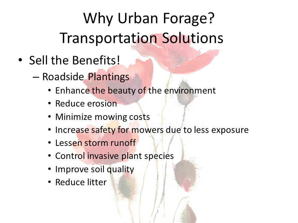 Why Urban Forage? Transportation Solutions Sell the Benefits! – Roadside Plantings Enhance the beauty of the environment Reduce erosion Minimize mowin