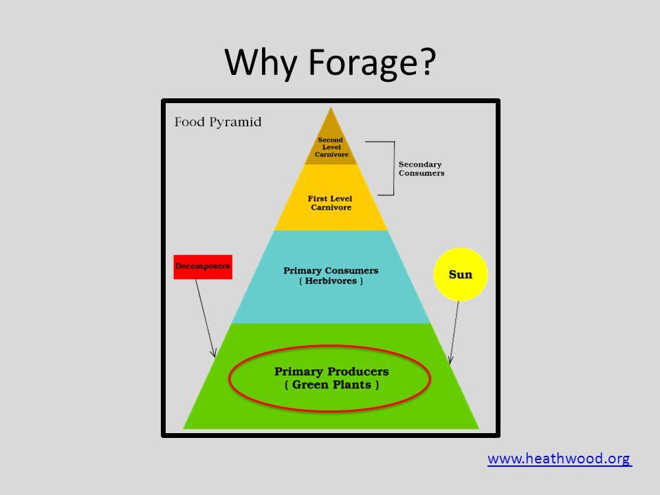  www.heathwood.org Why Forage?