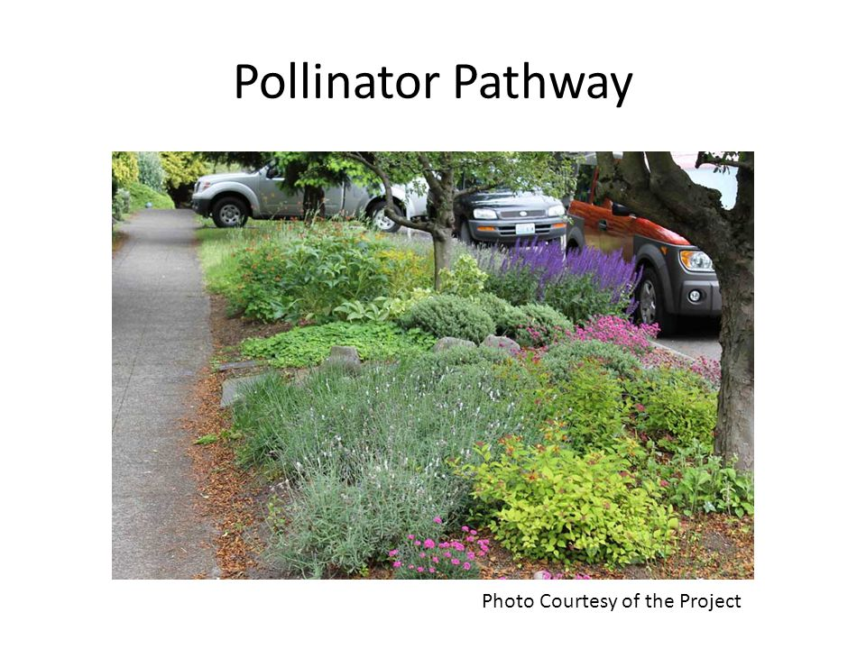 Pollinator Pathway Photo Courtesy of the Project
