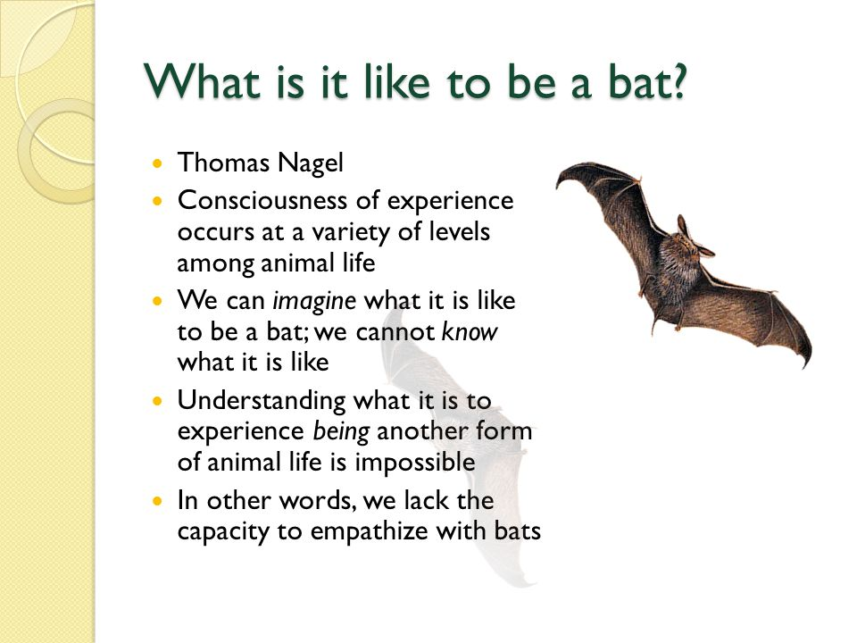 What is it like to be a bat.