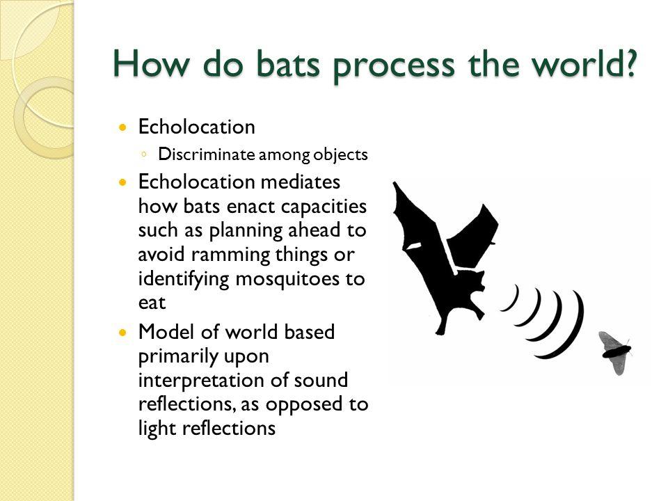 How do bats process the world.