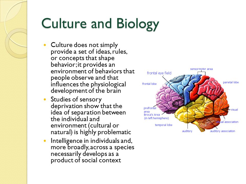 Culture and Biology Culture does not simply provide a set of ideas, rules, or concepts that shape behavior; it provides an environment of behaviors that people observe and that influences the physiological development of the brain Studies of sensory deprivation show that the idea of separation between the individual and environment (cultural or natural) is highly problematic Intelligence in individuals and, more broadly, across a species necessarily develops as a product of social context