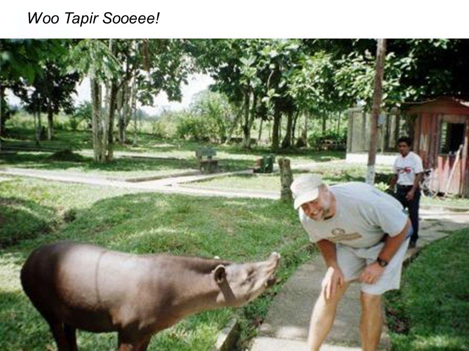 Woo Tapir Sooeee!