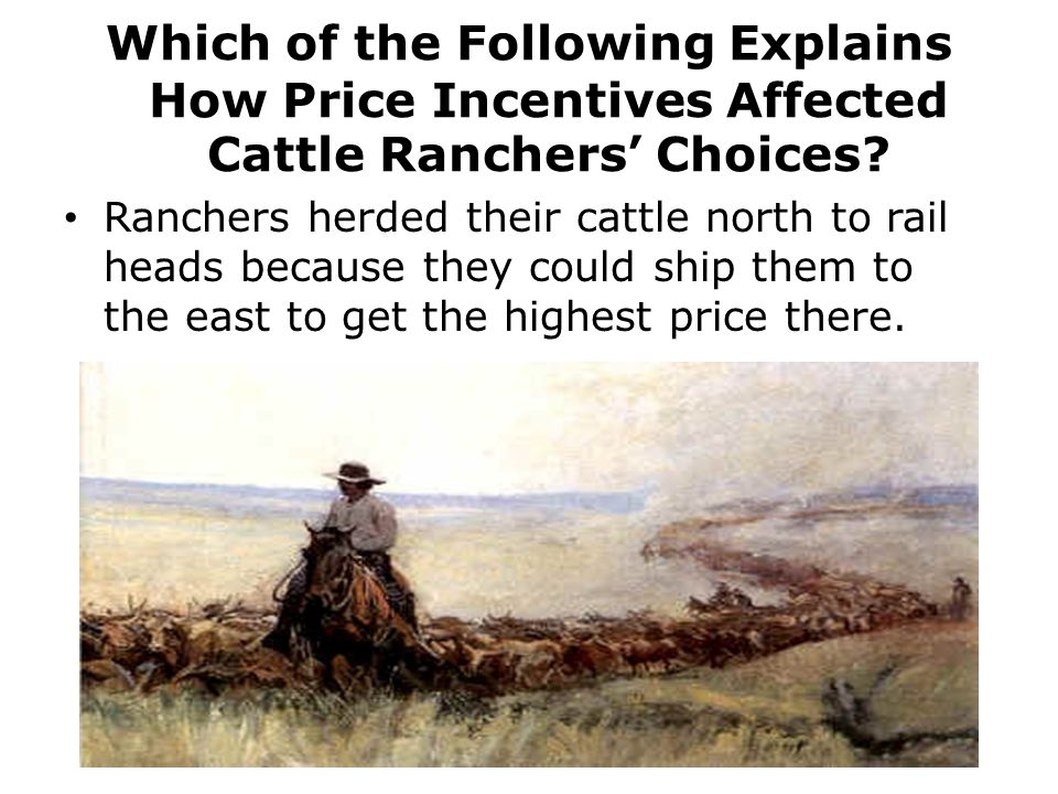 Which of the Following Explains How Price Incentives Affected Cattle Ranchers' Choices.