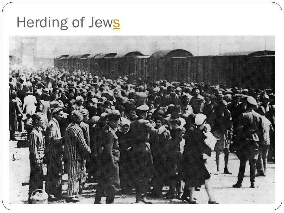Herding of Jewss