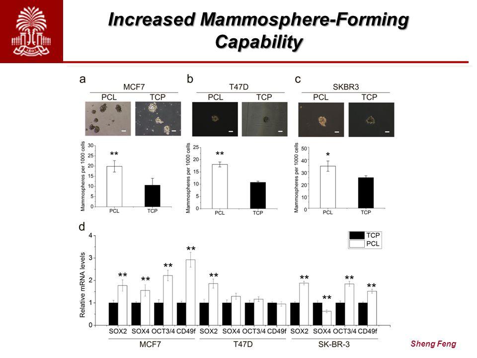 Increased Mammosphere-Forming Capability A Aligned FiberRandom Fiber Sheng Feng