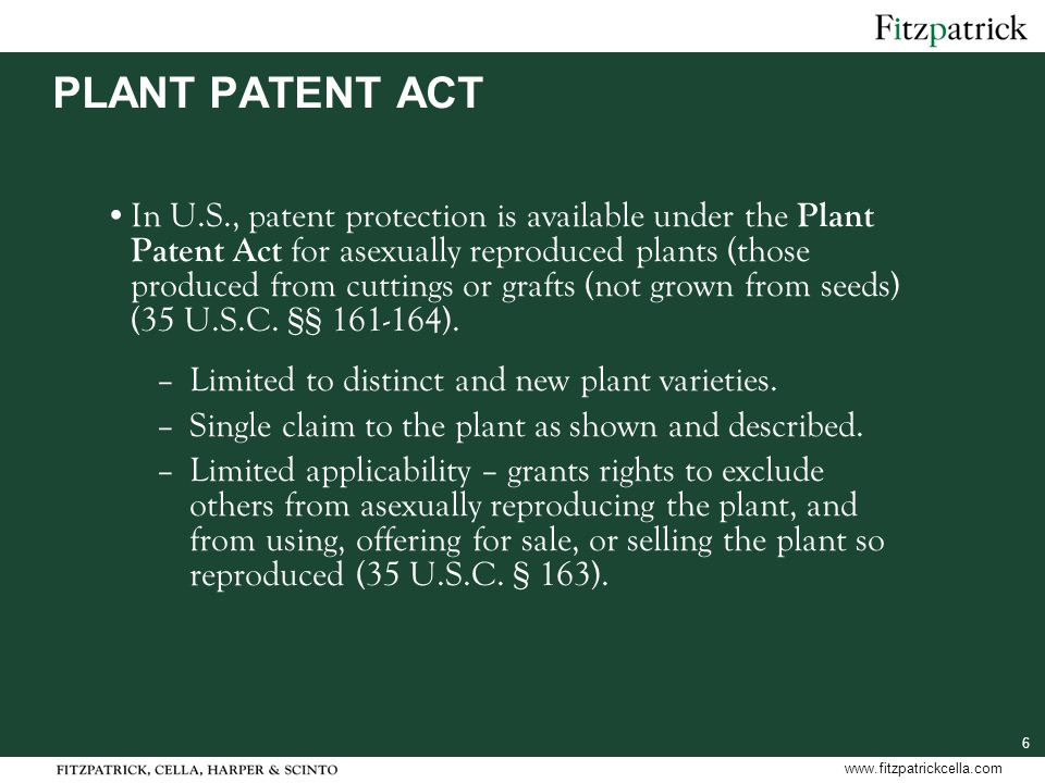 6 www.fitzpatrickcella.com PLANT PATENT ACT In U.S., patent protection is available under the Plant Patent Act for asexually reproduced plants (those produced from cuttings or grafts (not grown from seeds) (35 U.S.C.