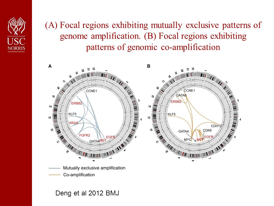 (A) Focal regions exhibiting mutually exclusive patterns of genome amplification.