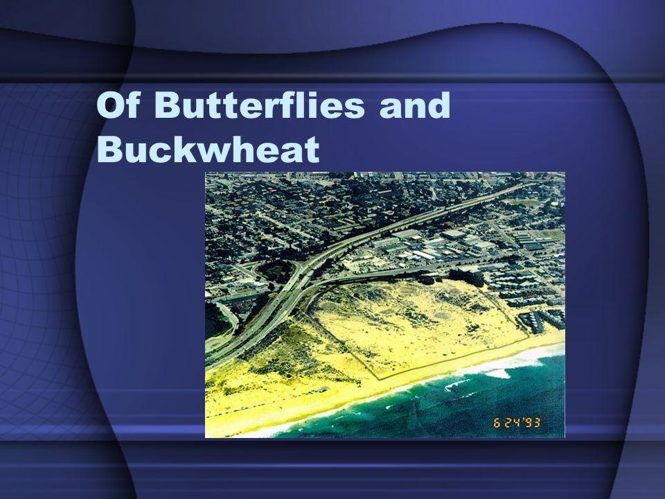 Of Butterflies and Buckwheat