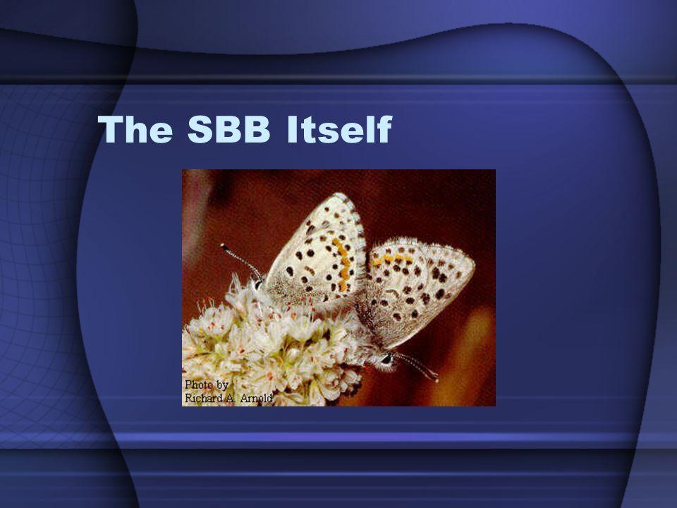 The SBB Itself