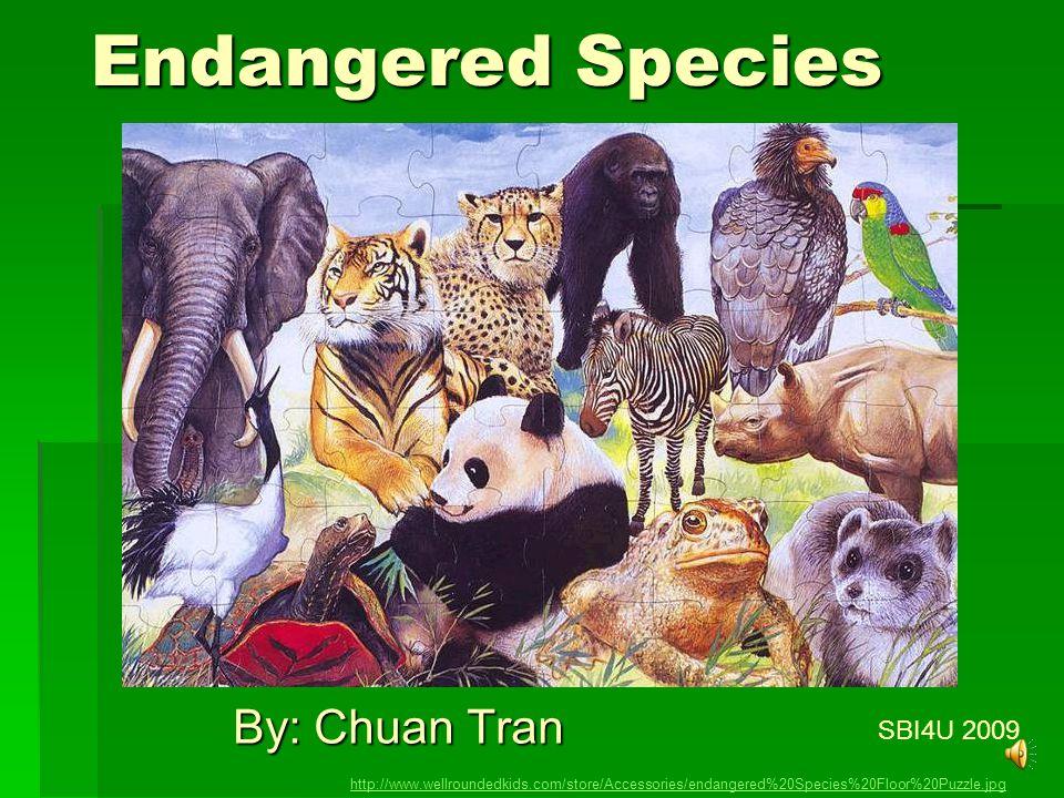 Endangered Species By: Chuan Tran SBI4U 2009 http://www.wellroundedkids.com/store/Accessories/endangered%20Species%20Floor%20Puzzle.jpg