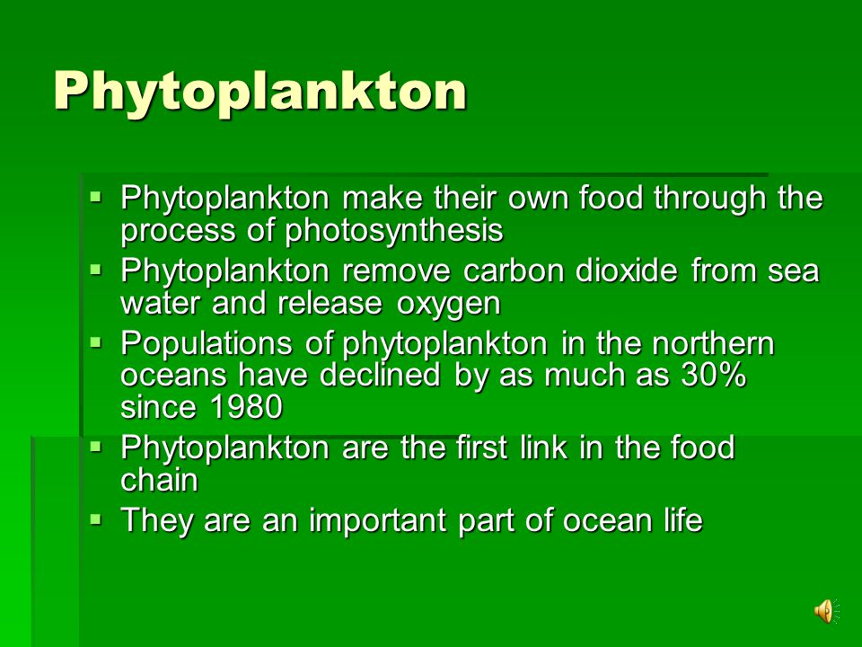 Plankton  Plankton is a term for species of microorganisms that drift in open water  They are generally about 1/1000 th of a mm  They are the most abundant form of life in the ocean  There are two types of plankton  Phytoplankton  Zooplankton