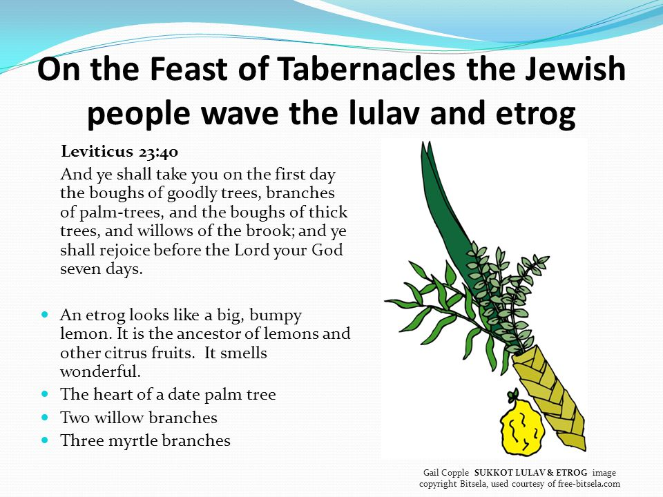 On the Feast of Tabernacles the Jewish people wave the lulav and etrog Leviticus 23:40 And ye shall take you on the first day the boughs of goodly trees, branches of palm-trees, and the boughs of thick trees, and willows of the brook; and ye shall rejoice before the Lord your God seven days.
