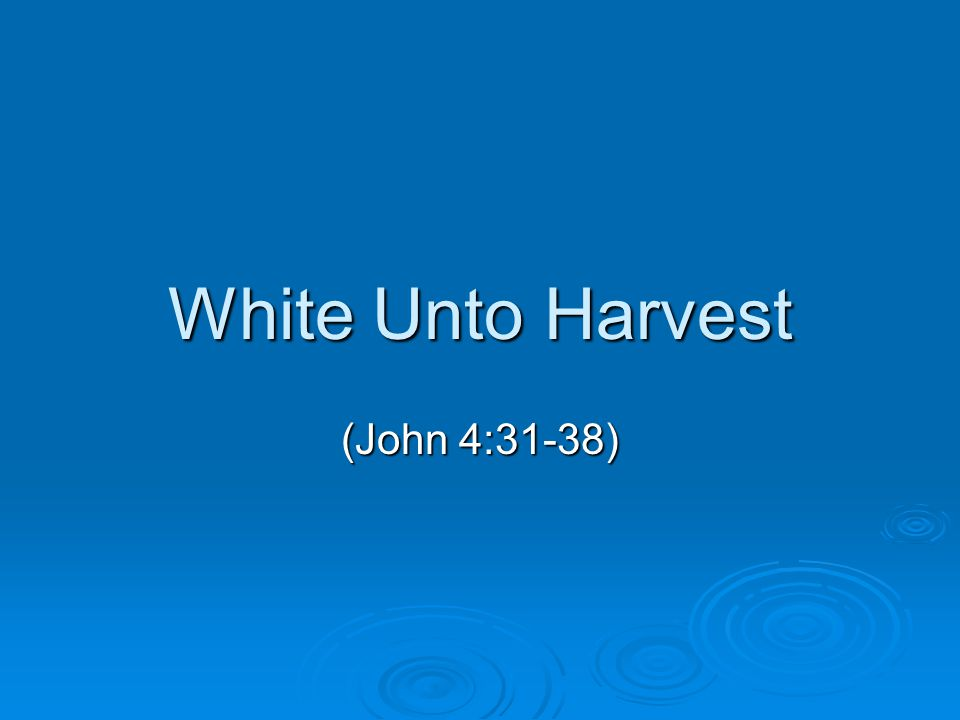 White Unto Harvest (John 4:31-38)