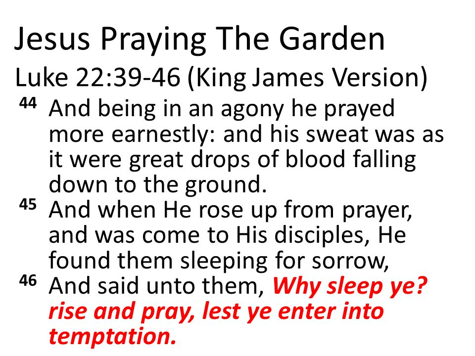 Jesus Praying The Garden Luke 22:39-46 (King James Version) 44 And being in an agony he prayed more earnestly: and his sweat was as it were great drops of blood falling down to the ground.
