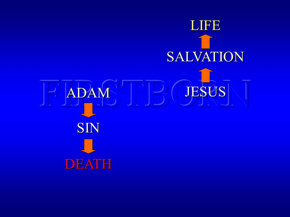 ADAMSIN DEATH JESUS SALVATIONLIFE