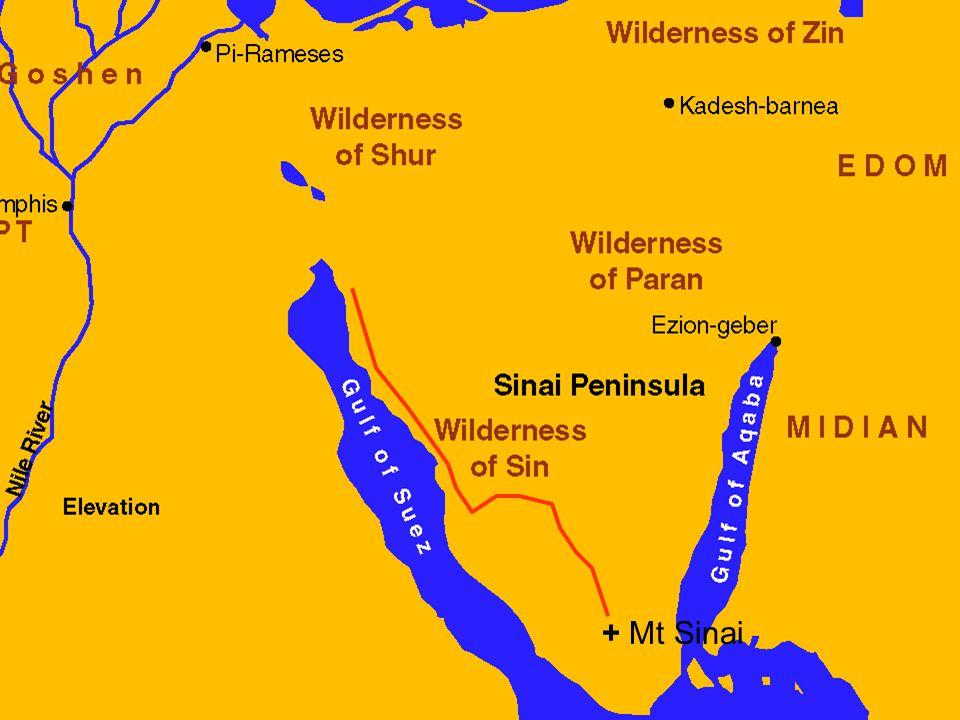 + Mt Sinai