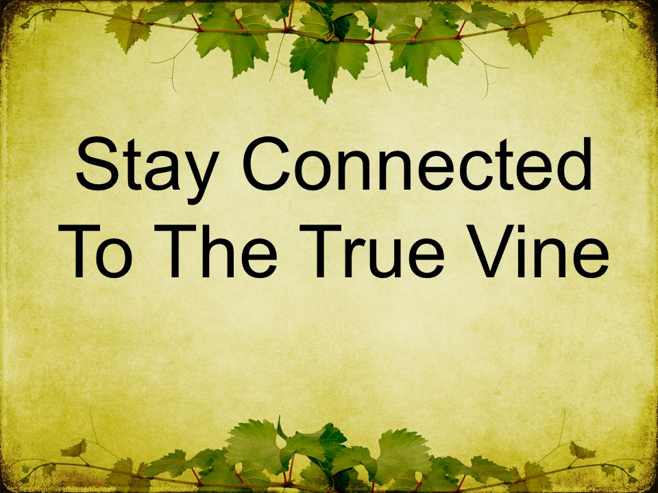 Stay Connected To The True Vine