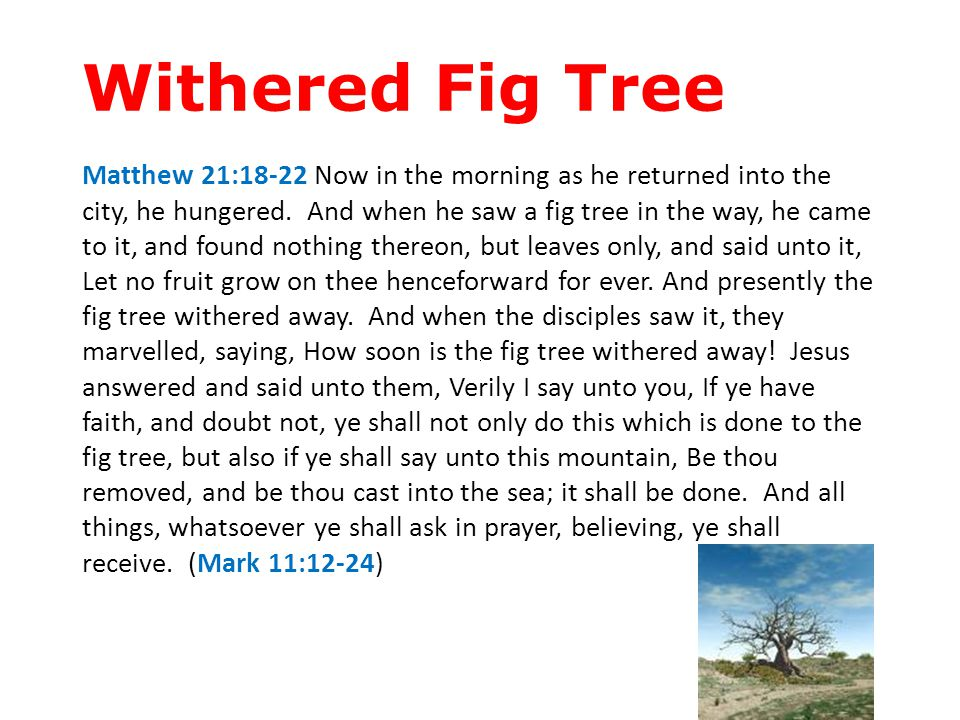 Withered Fig Tree Matthew 21:18-22 Now in the morning as he returned into the city, he hungered. And when he saw a fig tree in the way, he came to it,