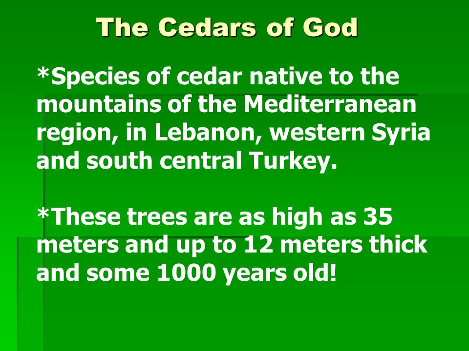 *Species of cedar native to the mountains of the Mediterranean region, in Lebanon, western Syria and south central Turkey.
