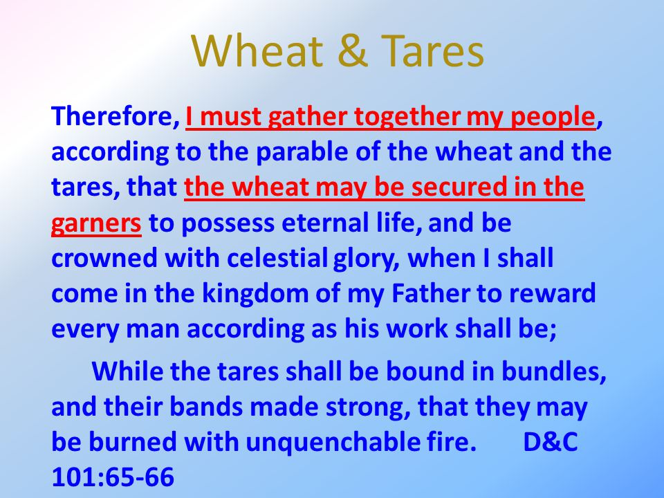 Wheat & Tares Therefore, I must gather together my people, according to the parable of the wheat and the tares, that the wheat may be secured in the g