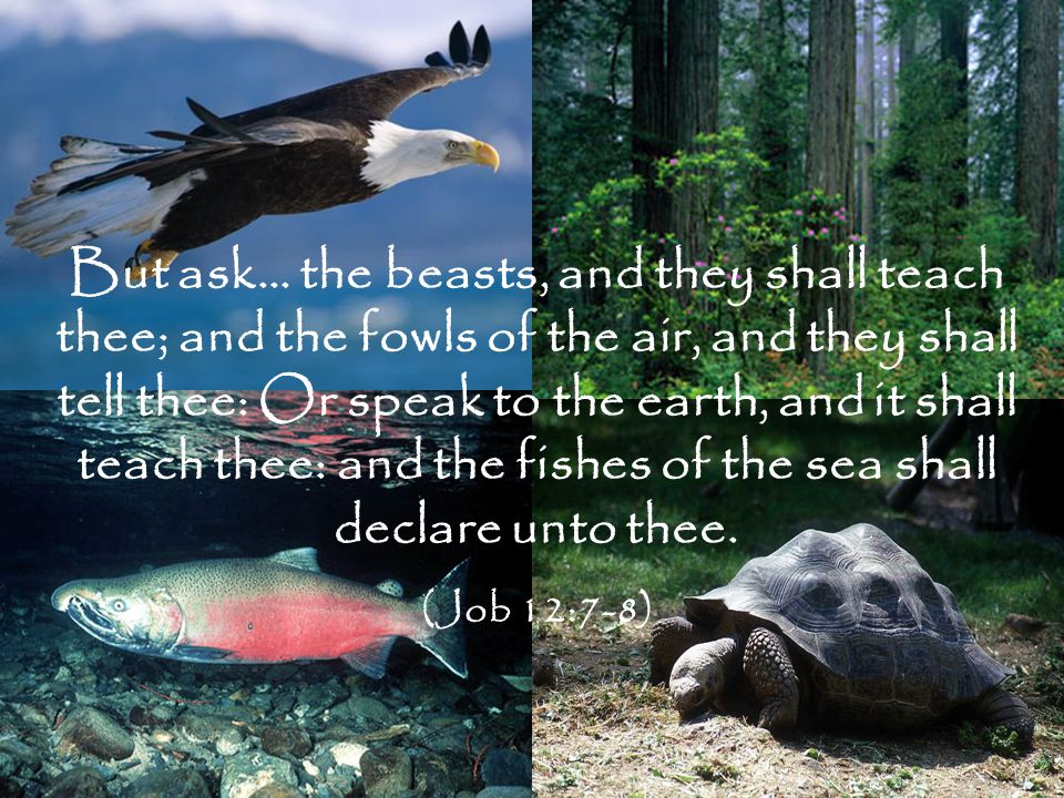 But ask… the beasts, and they shall teach thee; and the fowls of the air, and they shall tell thee: Or speak to the earth, and it shall teach thee: and the fishes of the sea shall declare unto thee.