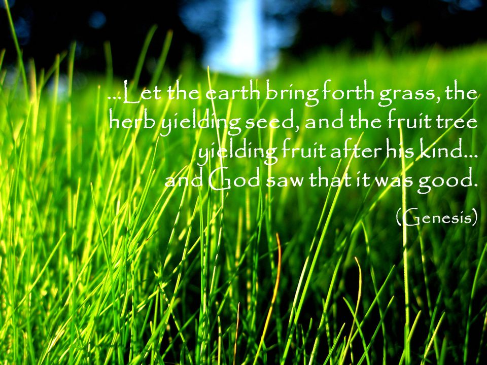 …Let the earth bring forth grass, the herb yielding seed, and the fruit tree yielding fruit after his kind… and God saw that it was good.