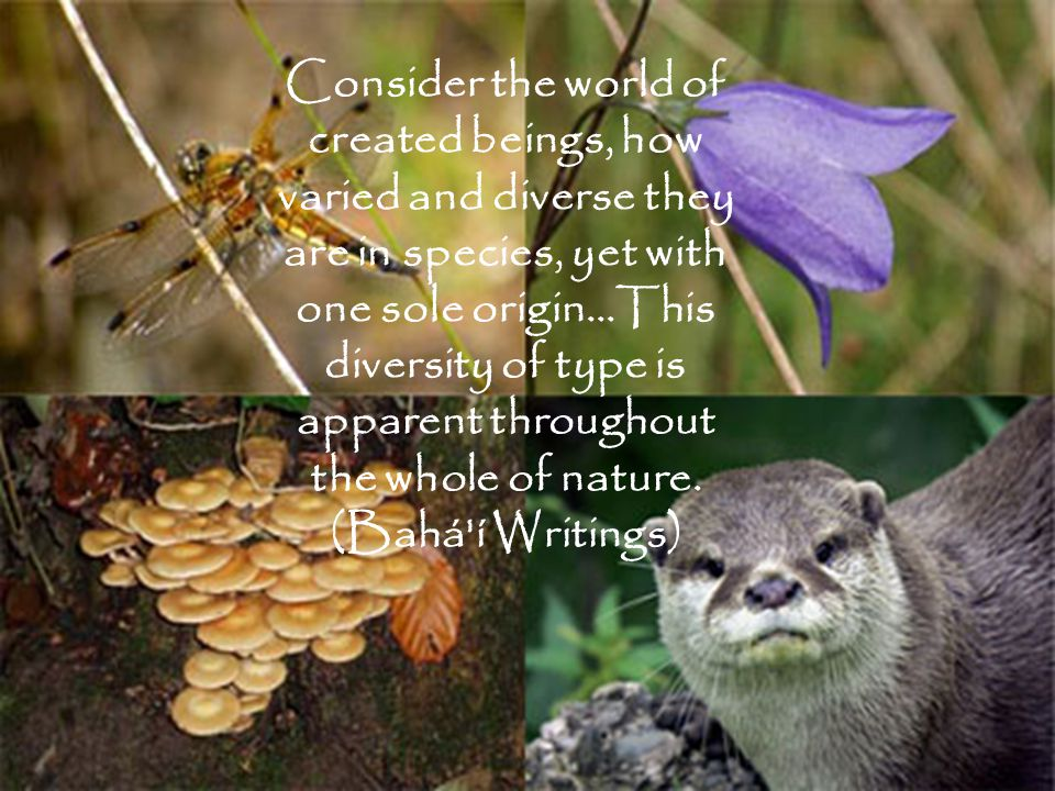 Consider the world of created beings, how varied and diverse they are in species, yet with one sole origin…This diversity of type is apparent throughout the whole of nature.
