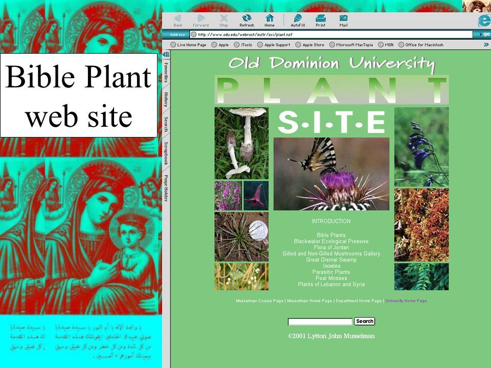 Bible Plant web site