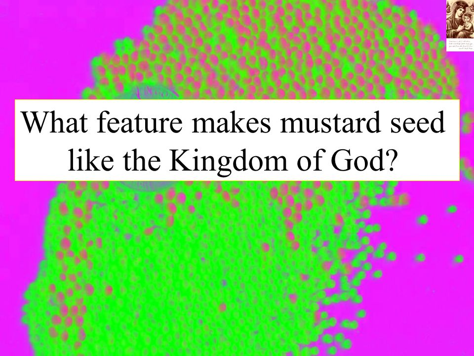 What feature makes mustard seed like the Kingdom of God?