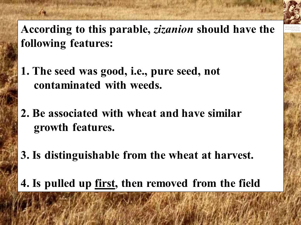 According to this parable, zizanion should have the following features: 1. The seed was good, i.e., pure seed, not contaminated with weeds. 2. Be asso