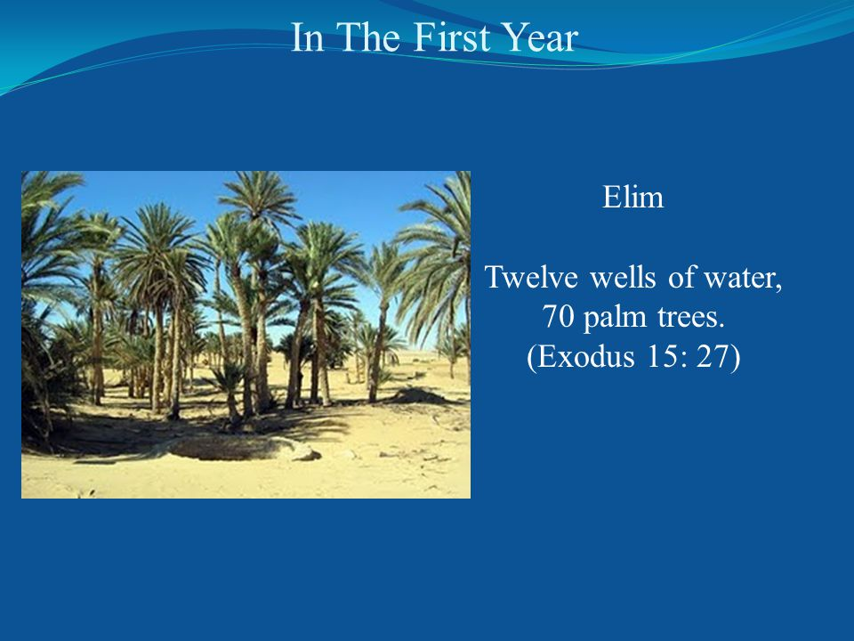 In The First Year Elim Twelve wells of water, 70 palm trees. (Exodus 15: 27)