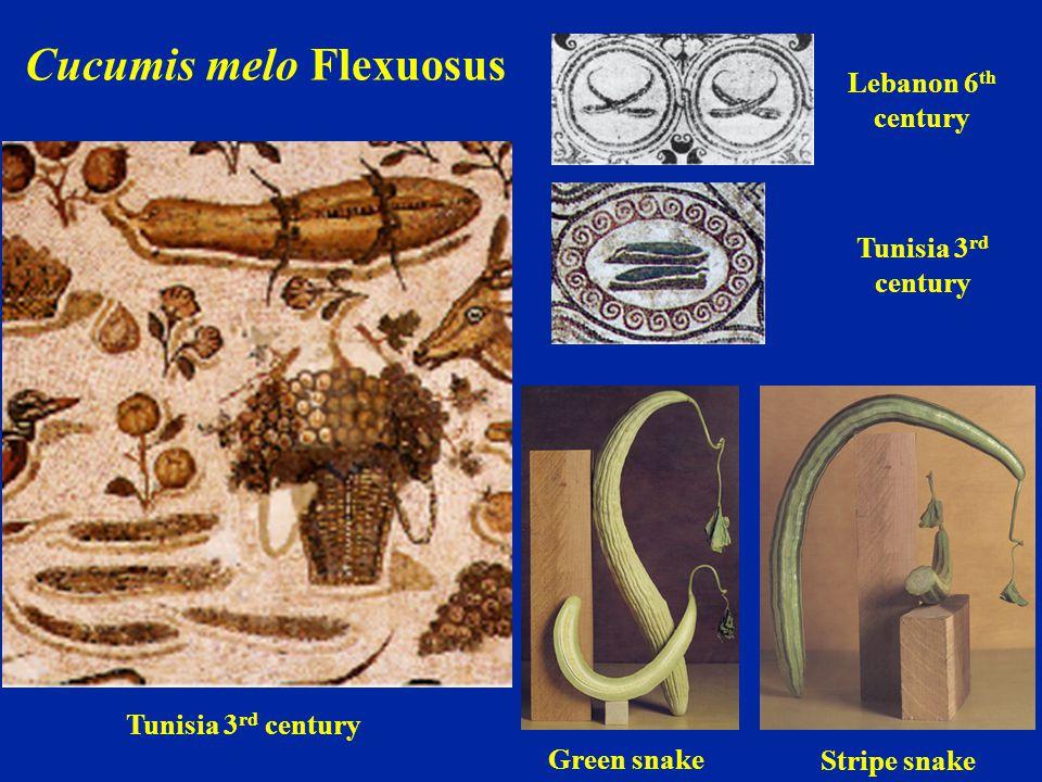 Tunisia 3 rd century Lebanon 6 th century Green snake Stripe snake Cucumis melo Flexuosus Tunisia 3 rd century