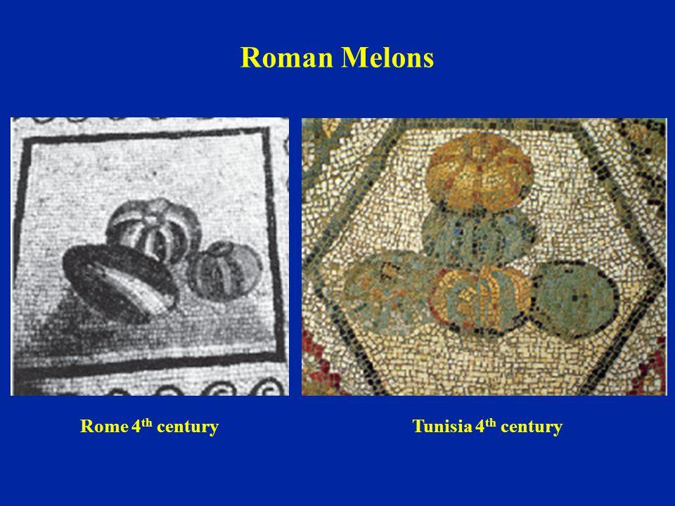 Roman Melons Rome 4 th centuryTunisia 4 th century