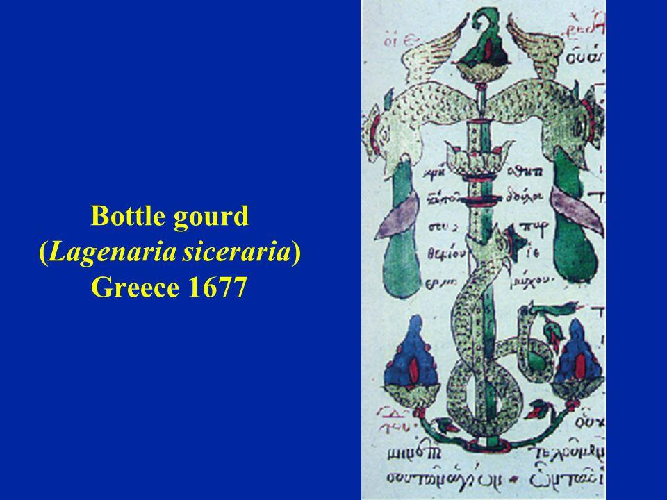 Bottle gourd (Lagenaria siceraria) Greece 1677
