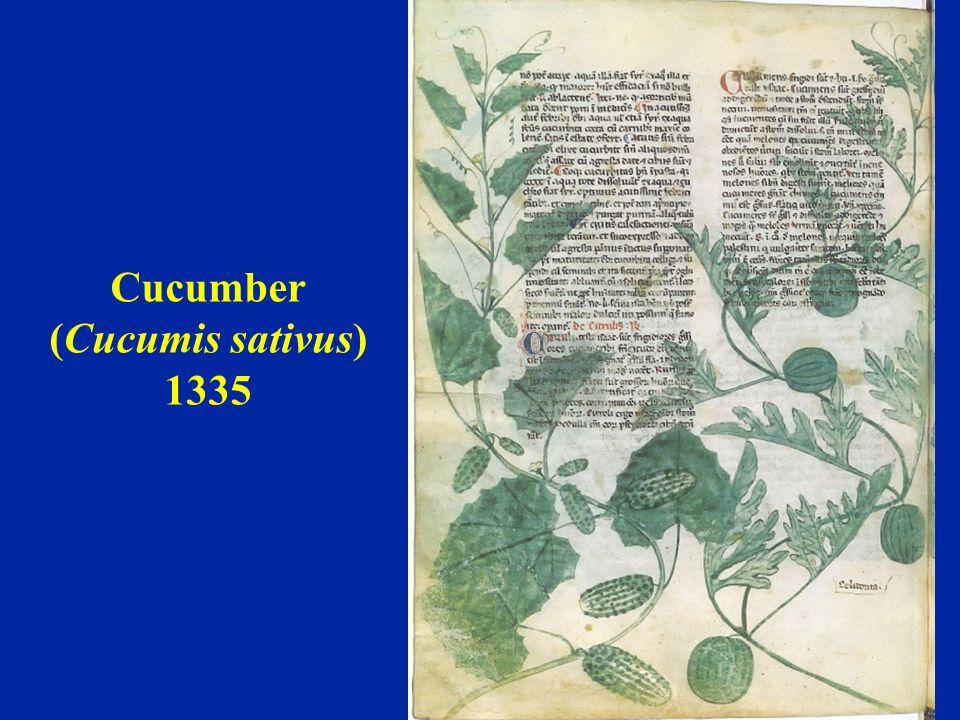 Cucumber (Cucumis sativus) 1335