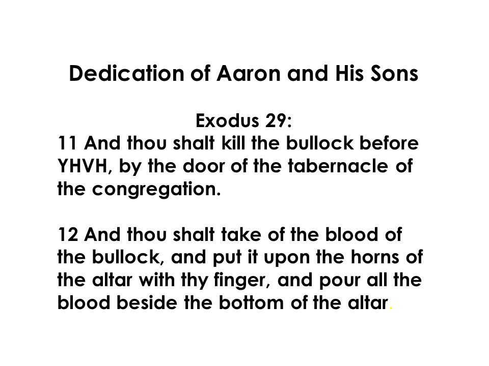 Dedication of Aaron and His Sons Exodus 29: 11 And thou shalt kill the bullock before YHVH, by the door of the tabernacle of the congregation.