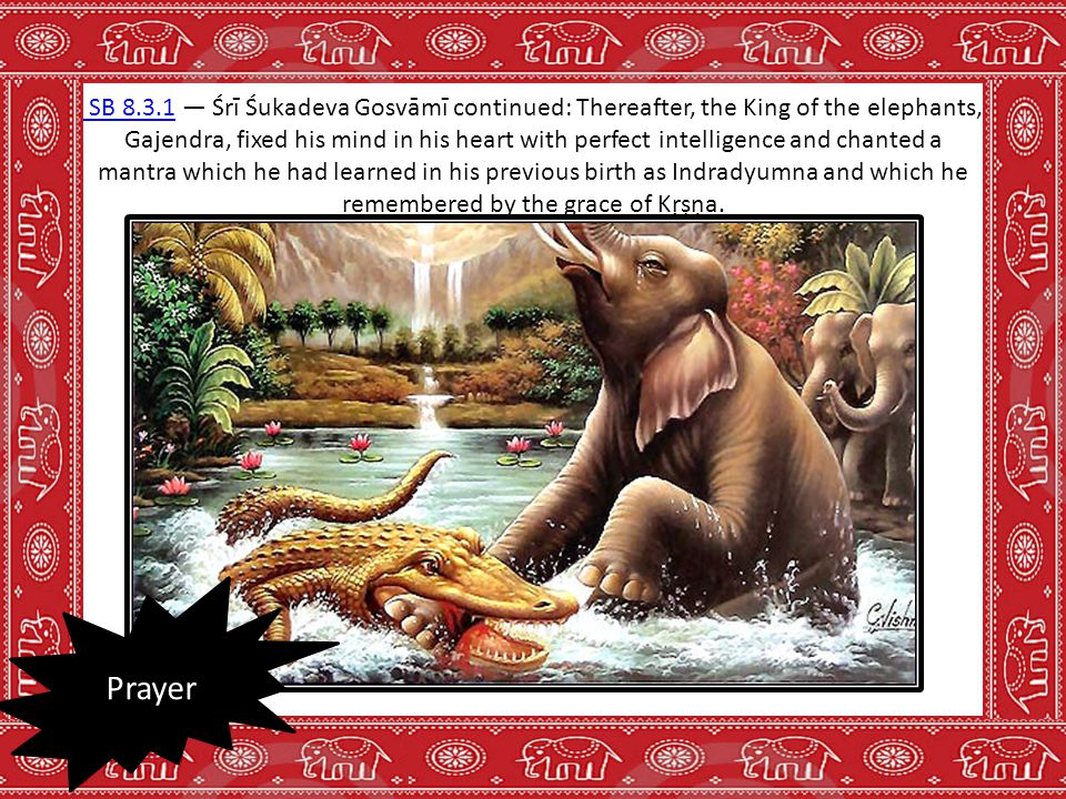 SB 8.3.1 SB 8.3.1 — Śrī Śukadeva Gosvāmī continued: Thereafter, the King of the elephants, Gajendra, fixed his mind in his heart with perfect intellig