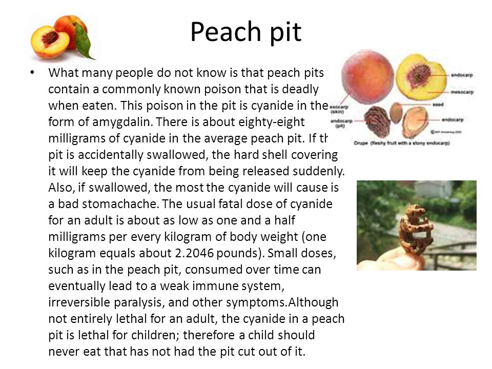 Peach pit What many people do not know is that peach pits contain a commonly known poison that is deadly when eaten.