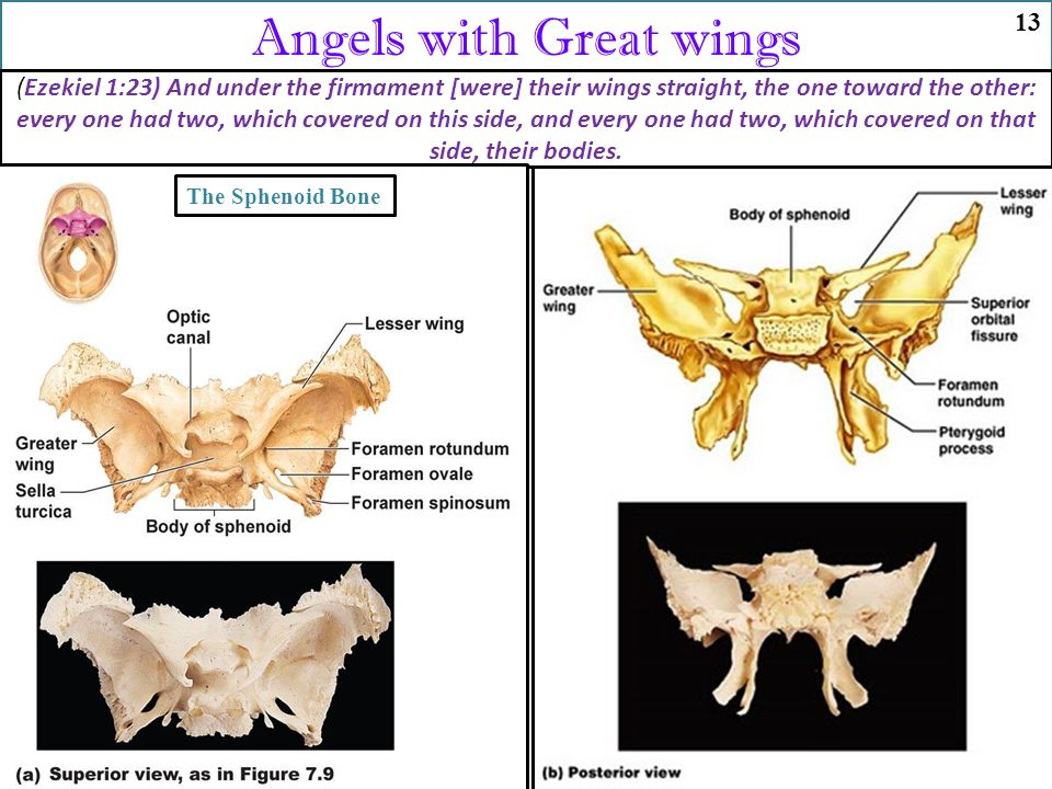 Angels with Great wings (Ezekiel 1:23) And under the firmament [were] their wings straight, the one toward the other: every one had two, which covered on this side, and every one had two, which covered on that side, their bodies.