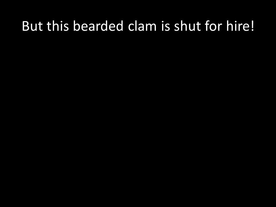 But this bearded clam is shut for hire!