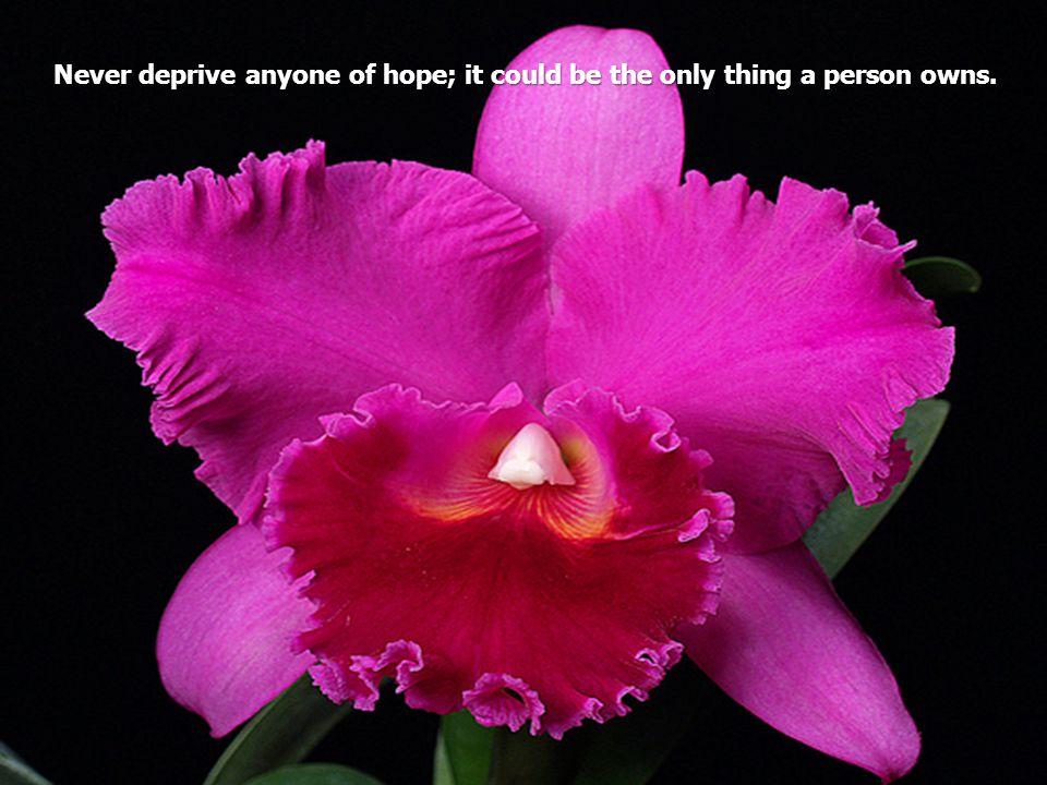 ORCHIDS ORCHIDS Musique : Automne Rose