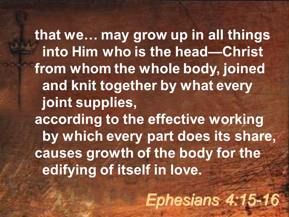 that we… may grow up in all things into Him who is the head—Christ from whom the whole body, joined and knit together by what every joint supplies, according to the effective working by which every part does its share, causes growth of the body for the edifying of itself in love.
