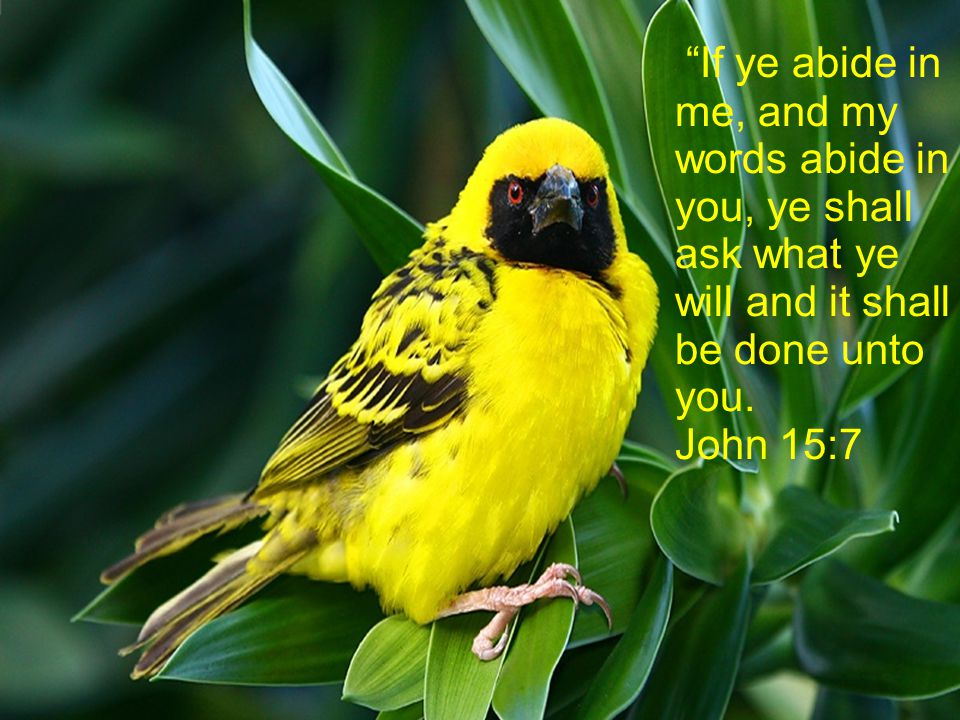 It is He who renews your strength and your faith, and if he takes care of a little bird, imagine what He will do for you, his beloved child, only believe!
