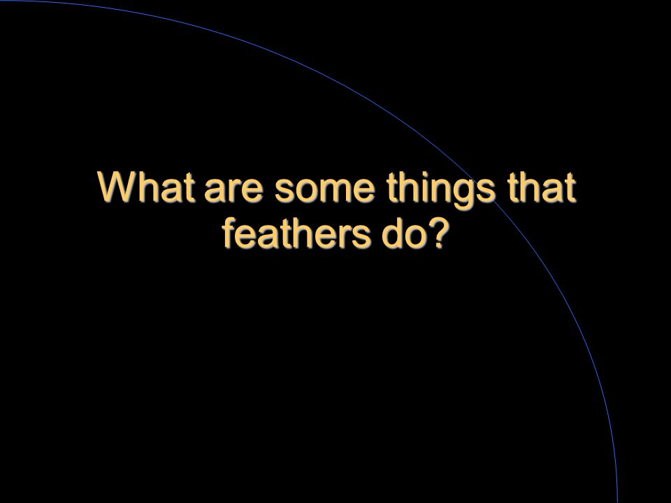 What is a feather