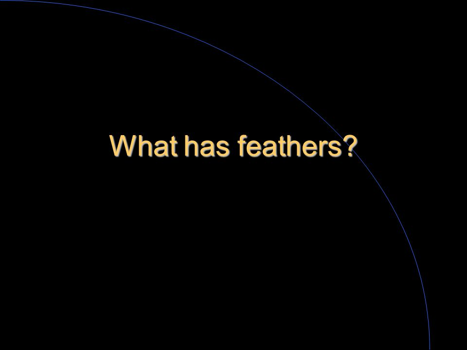 What are some things that feathers do?