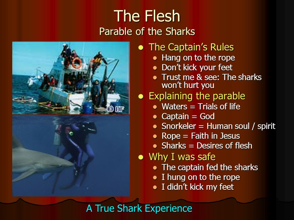 The Flesh Parable of the Sharks The Captain's Rules The Captain's Rules Hang on to the rope Don't kick your feet Trust me & see: The sharks won't hurt you Explaining the parable Explaining the parable Waters = Trials of life Captain = God Snorkeler = Human soul / spirit Rope = Faith in Jesus Sharks = Desires of flesh Why I was safe Why I was safe The captain fed the sharks I hung on to the rope I didn't kick my feet A True Shark Experience
